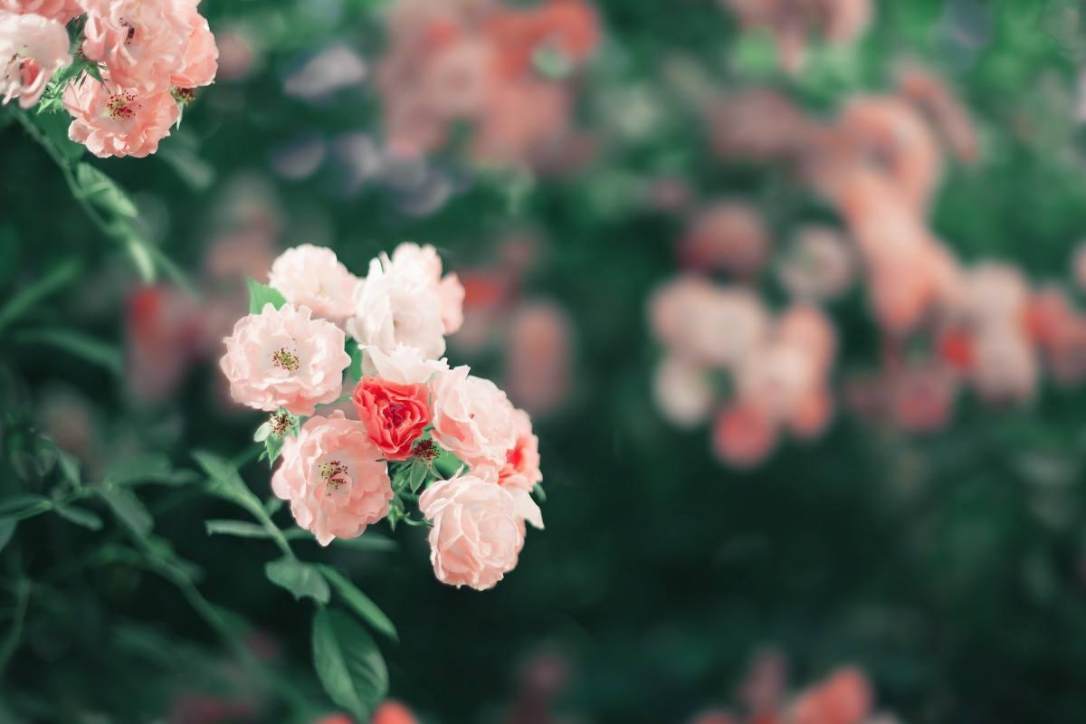 看透了爱情本质的情感说说心情语录:拥有未必就能幸福