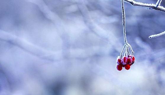 关于霜降的诗句澳门威尼斯人在线娱乐精选5首