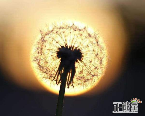 勵志說說正能量語錄精選句子:陽光總在風雨后
