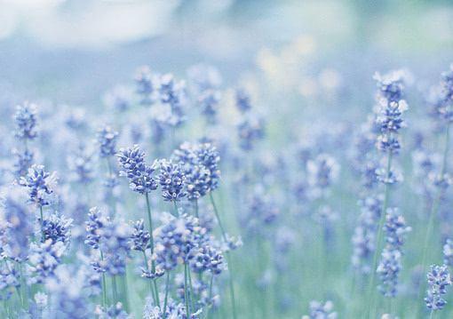 把喜欢埋在心里的的伤感语句:我偶尔会想起你,也希望你偶尔也能记起我