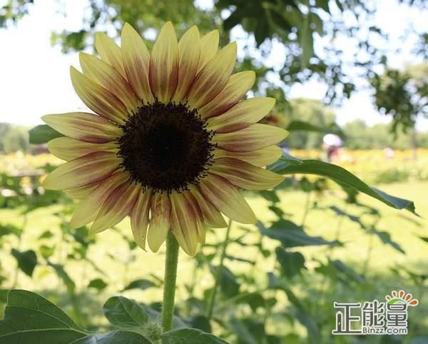 找到幸福文章分享:笑,是我们自己浇灌的阳光