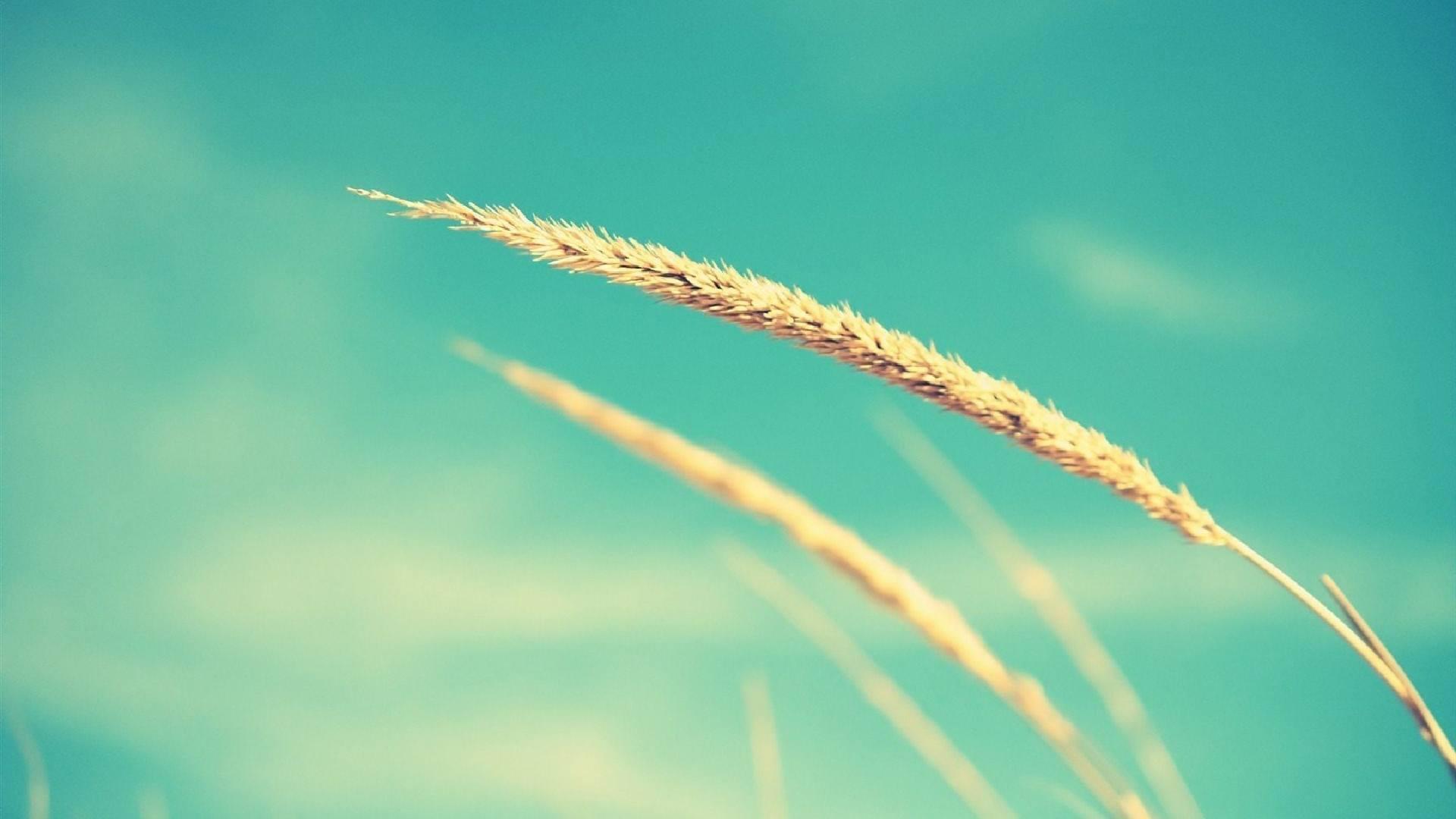 人生感悟成长经典语录:这世上最难能可贵的,就是不离不弃