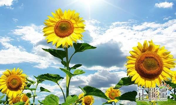 关于人生的正能量澳门威尼斯人在线娱乐平台语录:只要你面对阳光,黑暗总是在你后面!