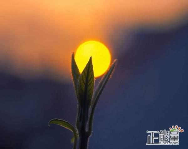 早安心语励志语录一句话:问心无愧,无怨无悔