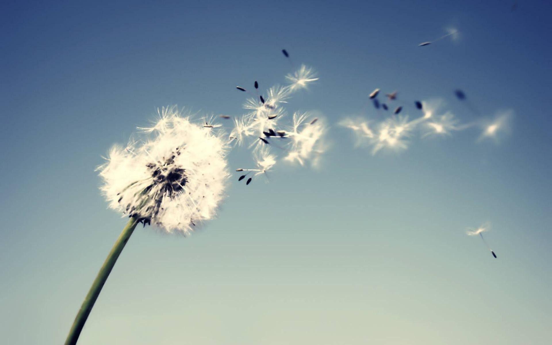 理想与现实的经典说说:人生总要有些经历,好的坏的,都是成长的过程