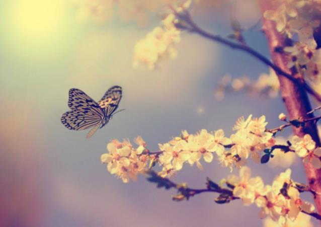 感悟生活的经典心情短语:心若简单,活得自然