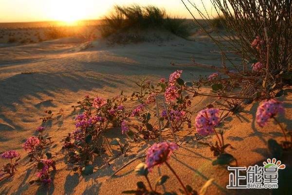 《沙漠之花》观后感1000字
