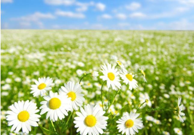 周四经典励志名言:要背负自己的人生,才能许诺别人的幸福。