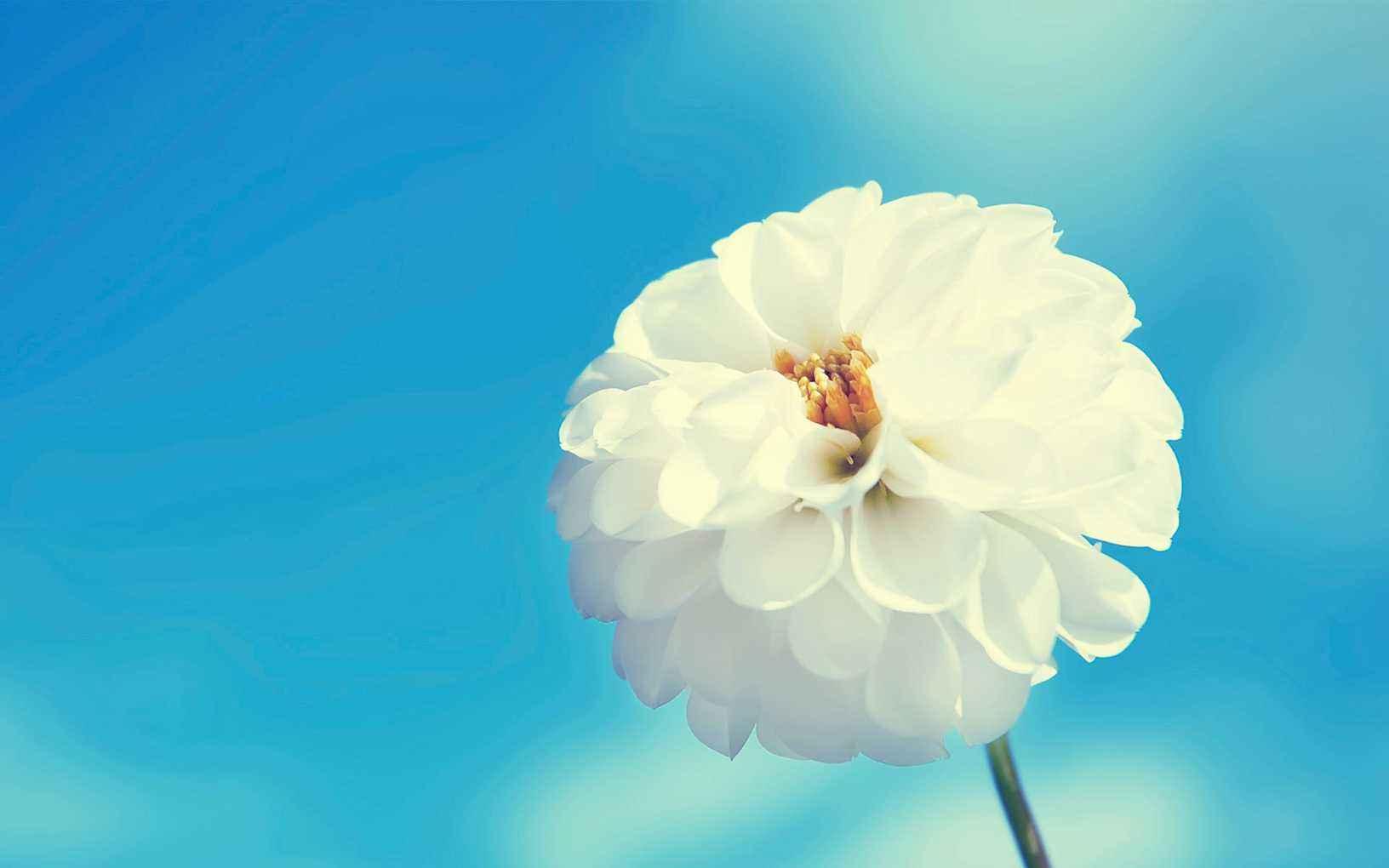 坚持梦想的正能量句子:不管往什么方向的努力都不会白费