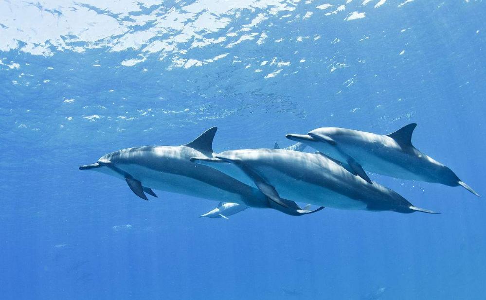 一个人的生命岛——《蓝色海豚岛》读后感作文300字