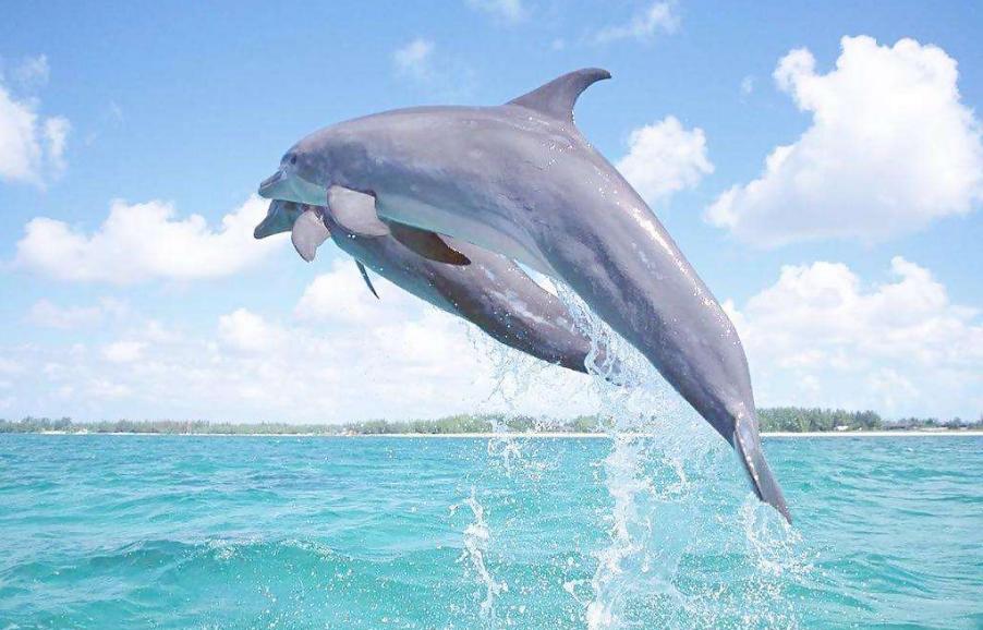 星际海豚侦察报告作文900字想像作文