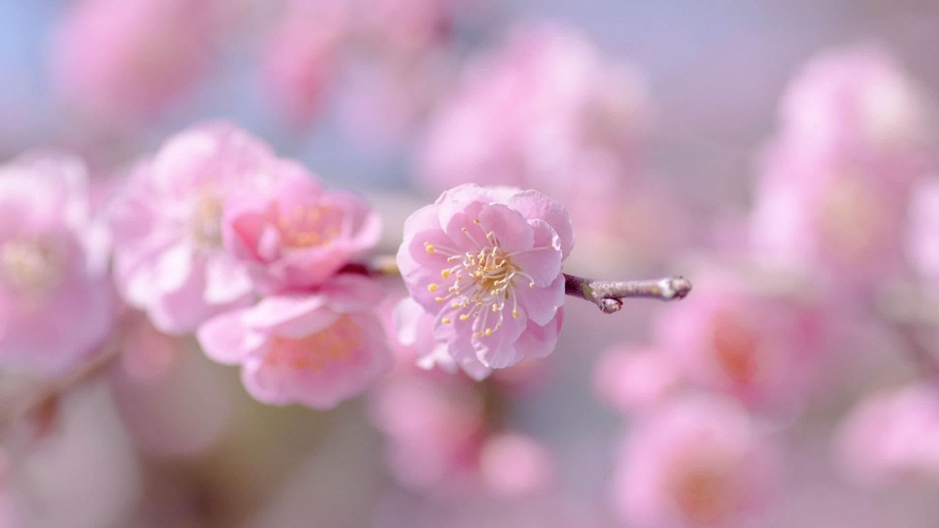 爱情感悟的句子伤感说说:有的相遇不是偶然,而是宿命