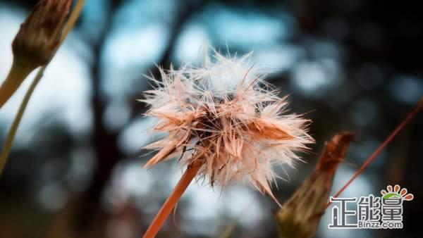 坚持梦想的正能量一句话:人生有无限的可能