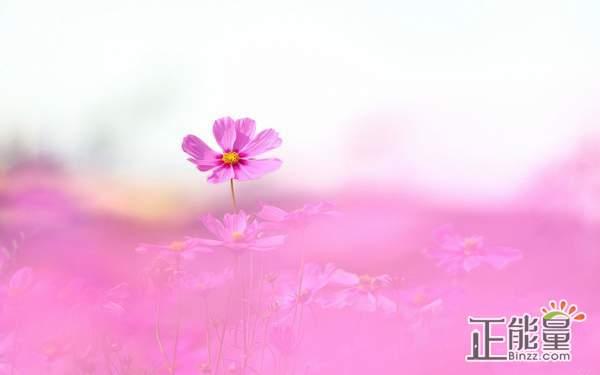 爱情经典语录说说情感句子:即使擦肩而过,也不会回到从前了