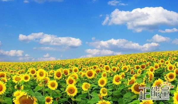 蘊含人生哲理的正能量勵志語錄:堅持自己的夢想,天空格外藍