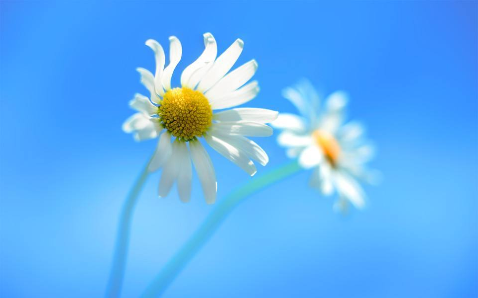 愛情的傷害經典情感說說:愛過你,很愛很愛的那種