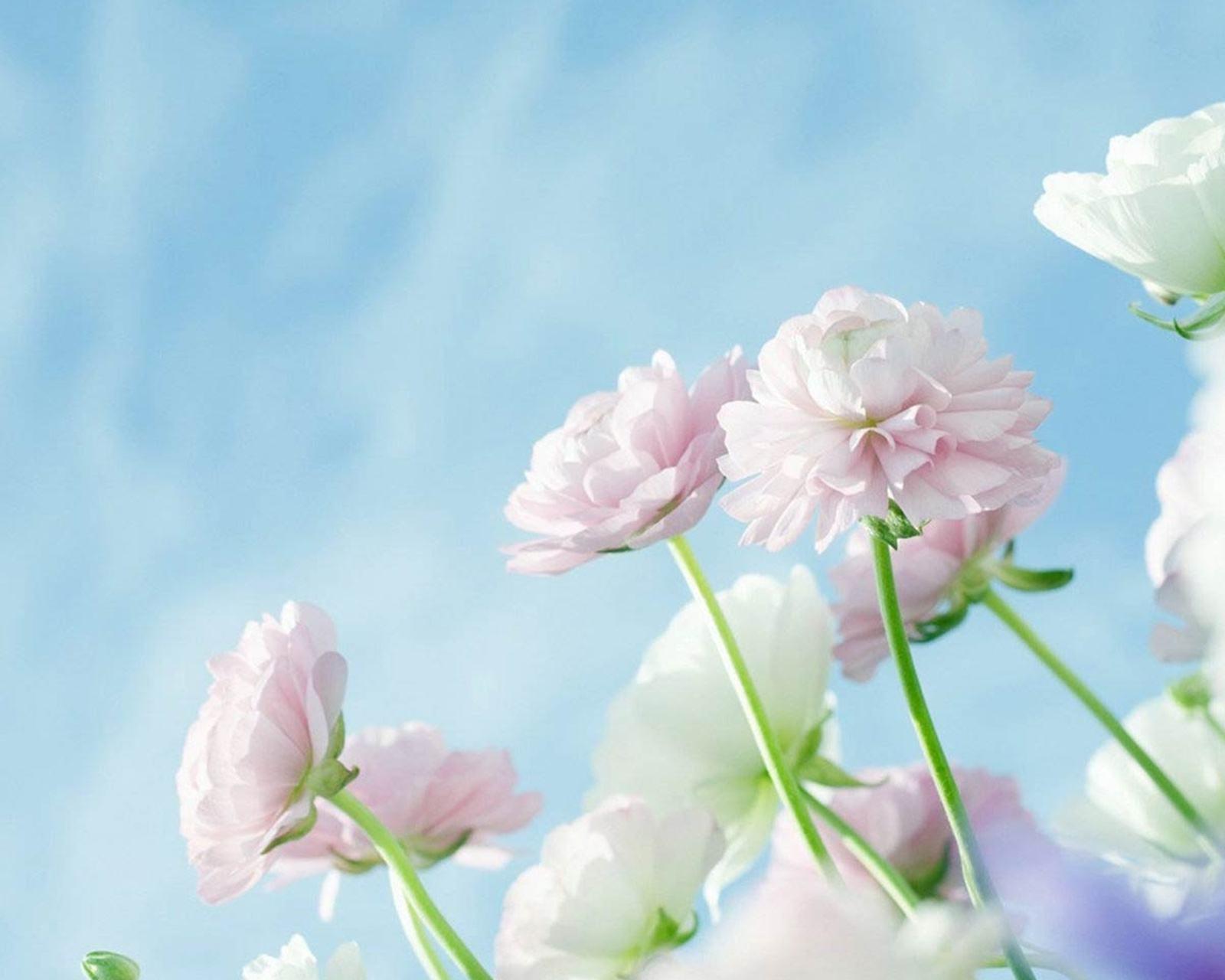 人生感悟正能量一句话:身处逆境,仍然相信前方有希望
