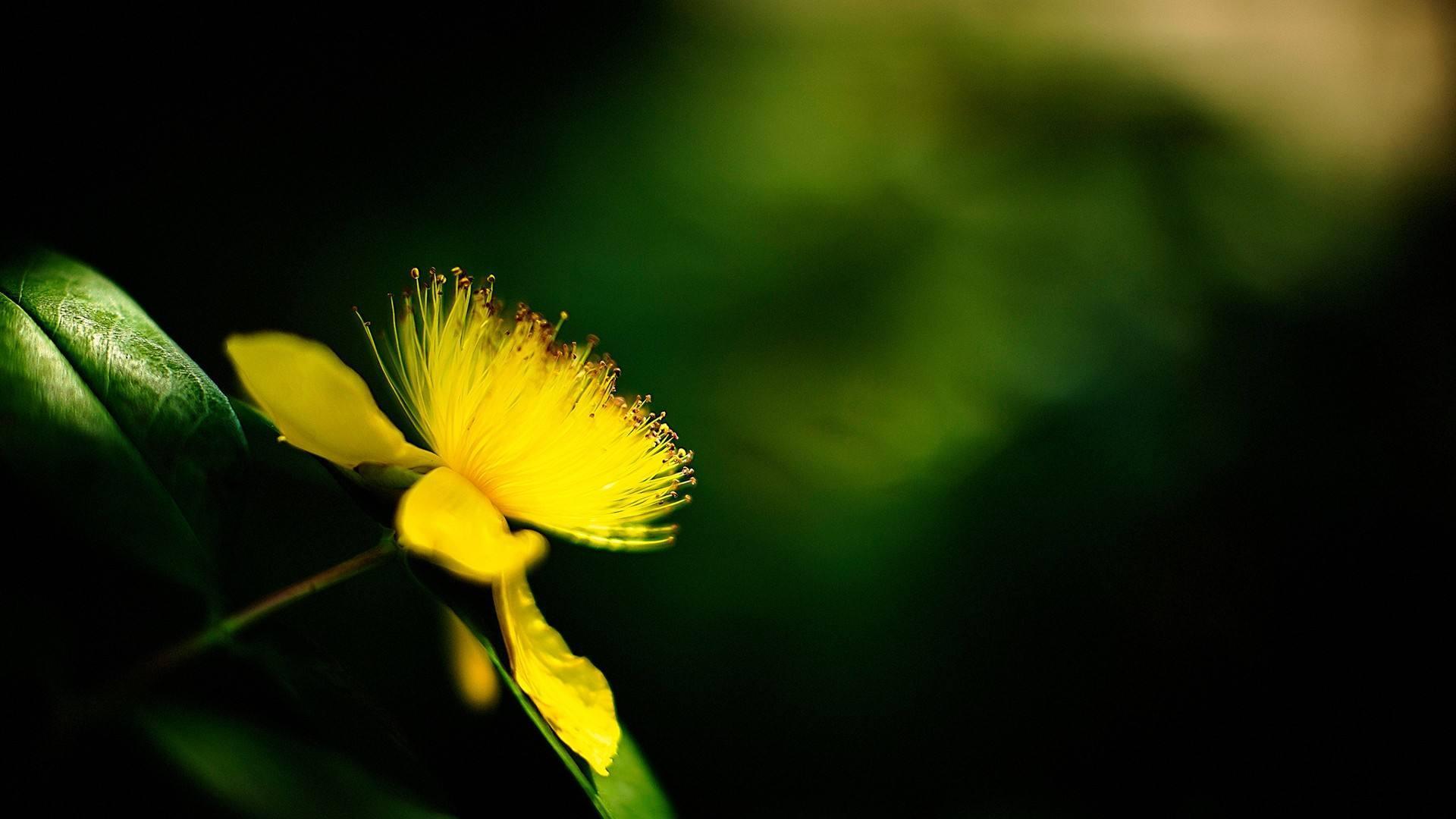 思考人生的正能量说说:抓住每一次机会,不要让自己后悔