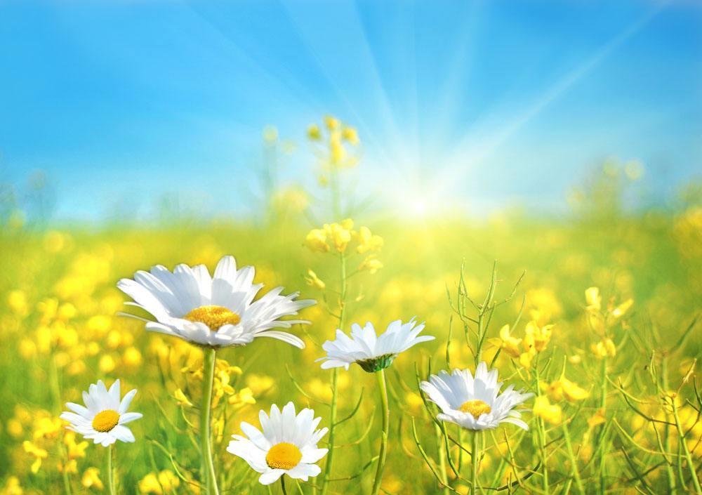 周日正能量励志语录:人只能努力的活着就是最大的成功