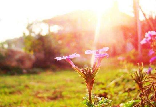 鞭策自己的正能量励志语录:大家都在努力生活。你不孤独!