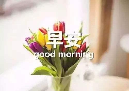 早安正能量励志语录集锦