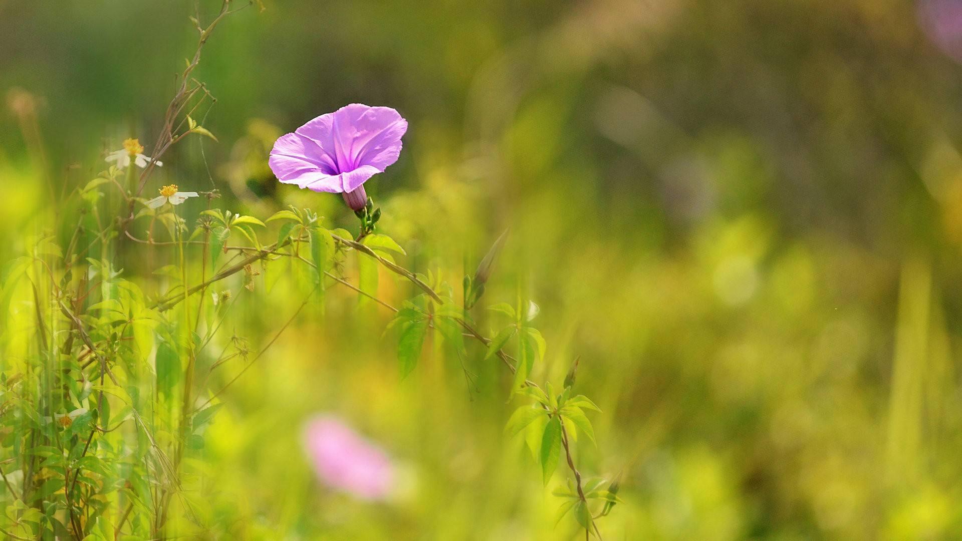 做自己的阳光正能量励志心情说说大全