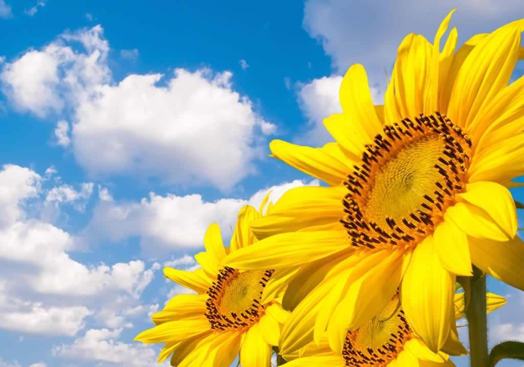 相信自己的正能量励志说说:相信自己,越长大内心越强大