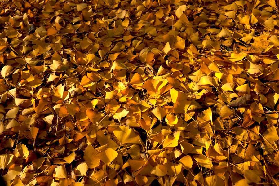 品味秋日的美丽散文