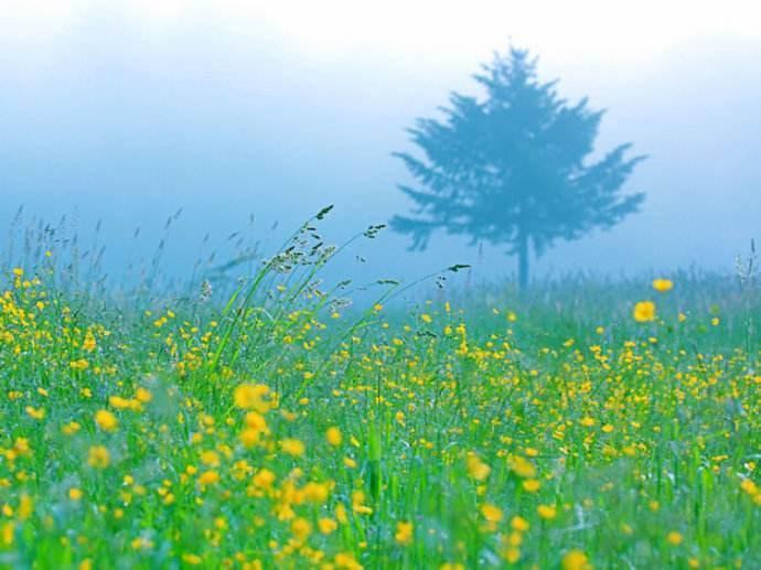 关于心灵的花园的随笔散文
