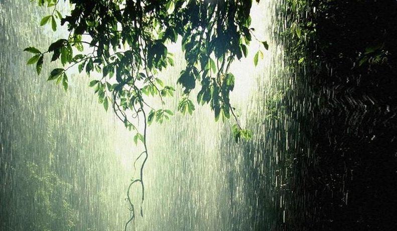 描写下雨天诚信的唯美散文