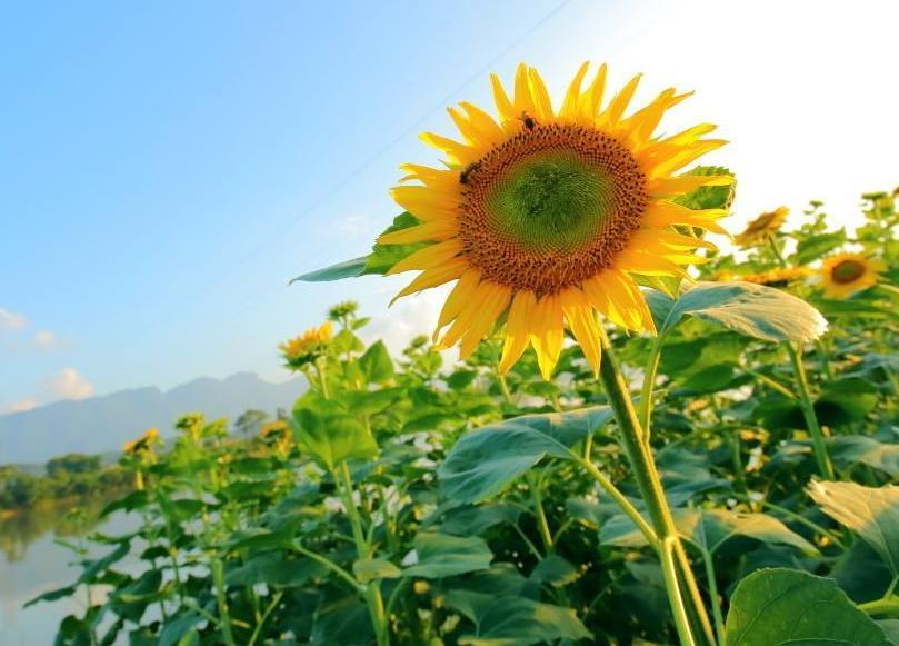 在困难中成长的正能量经典语录:保持自信,接纳真正的自己