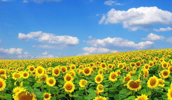 让人生变得多姿多彩的正能量说说:一切都将变好!加油,未来