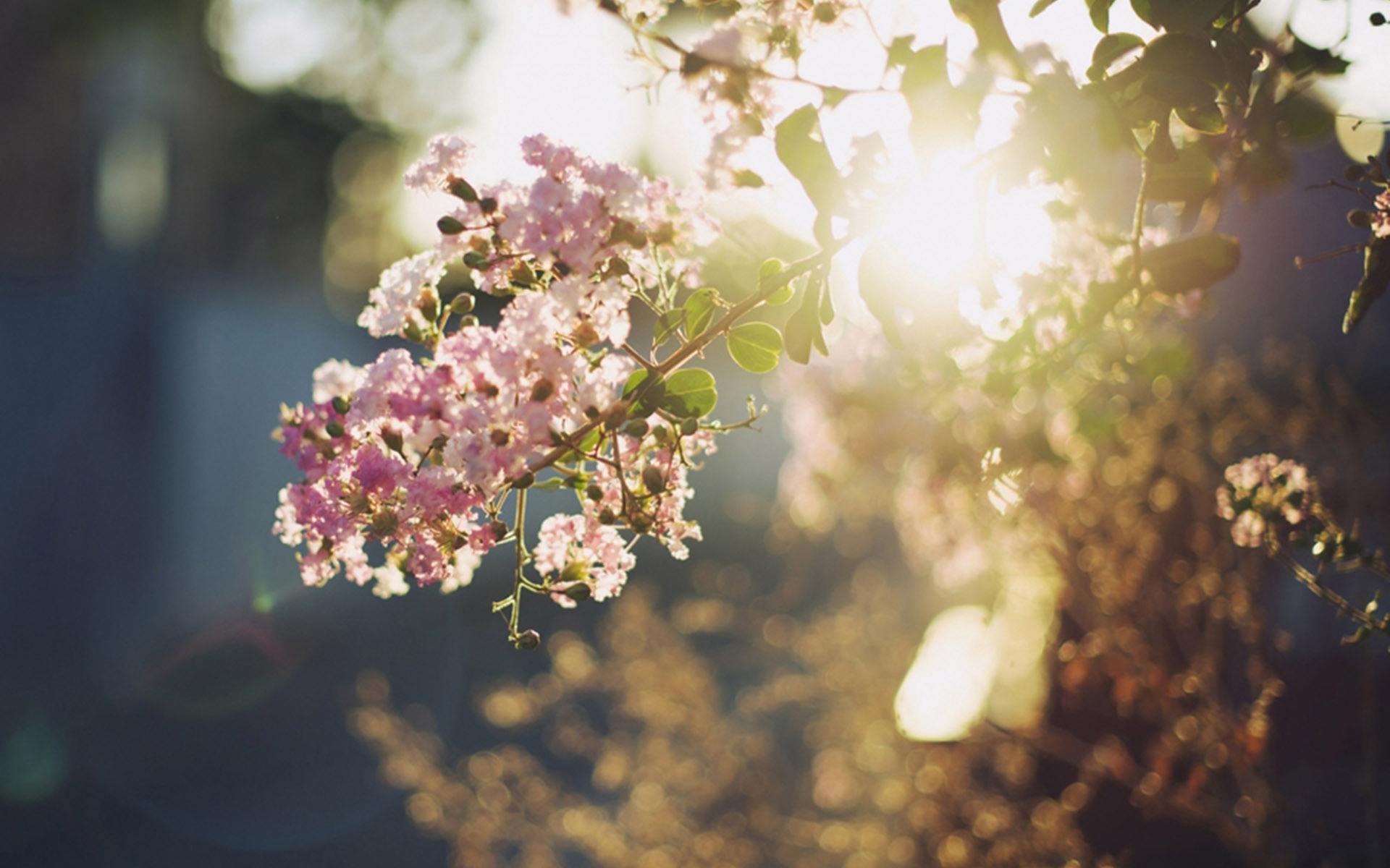 生活语录致自己人生感悟说说:我们要做明媚的小太阳