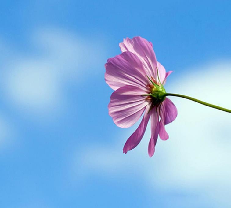 人生语录感悟心情说说句子:愿世人皆找到自己