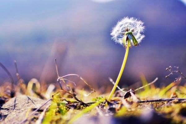 带有禅意的生活励志名言:不管眼前有怎样的困难,都不要伤害自己