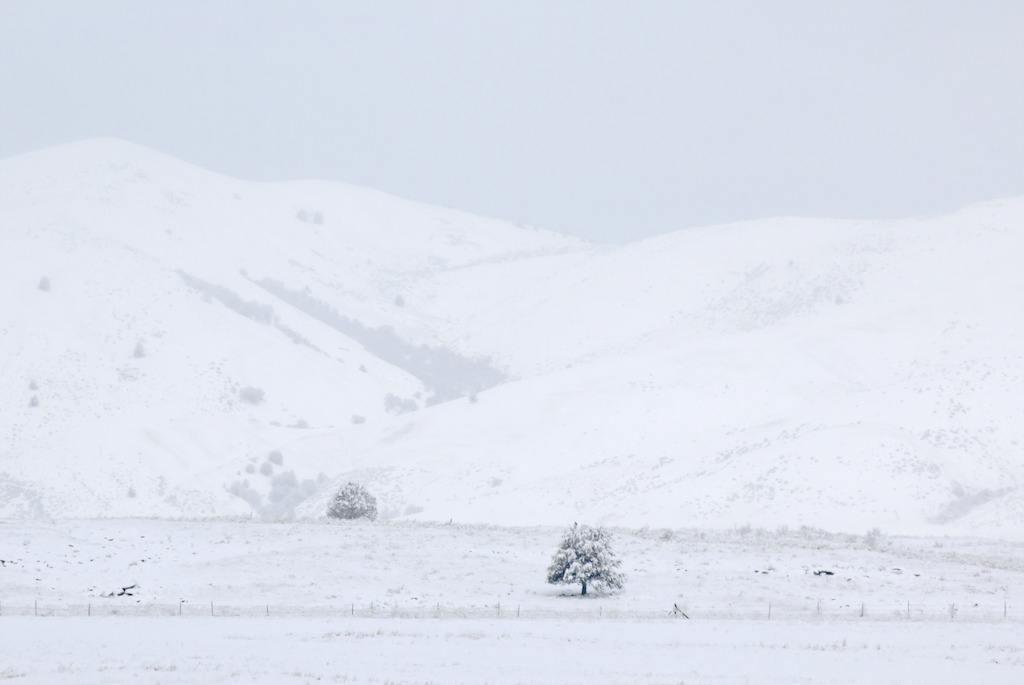 雪来的正是时候优美散文欣赏