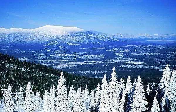 等一场美丽的雪飘美文