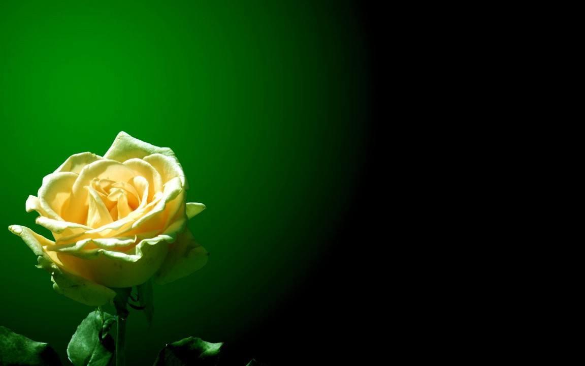 成长伴随着孤独的情感个性语录:孤独就孤独吧,我心安就好