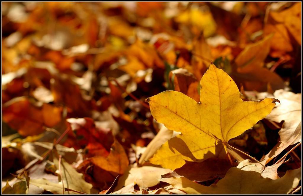 落叶的冬季散文欣赏