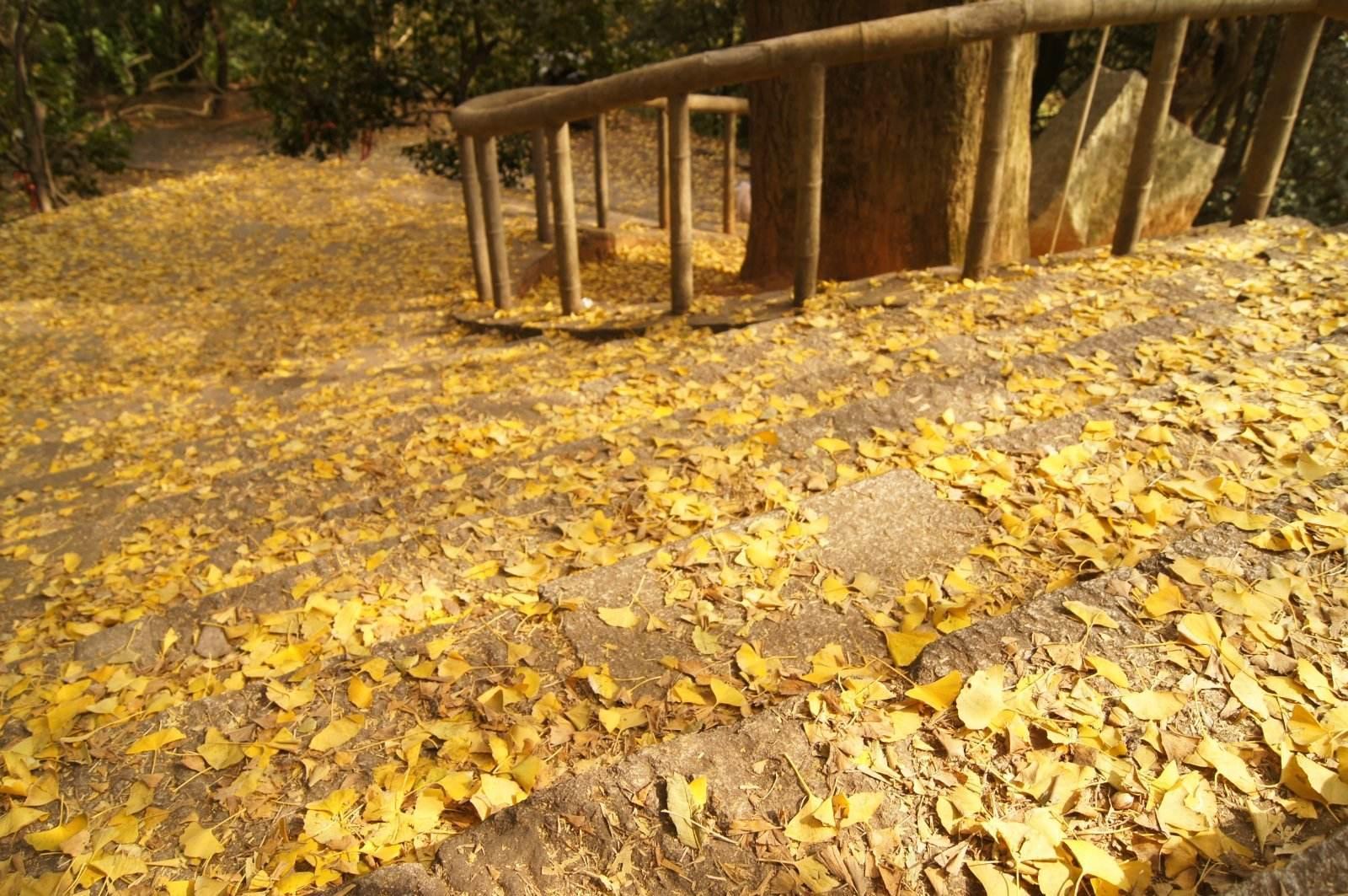 在校园里寻秋美文欣赏