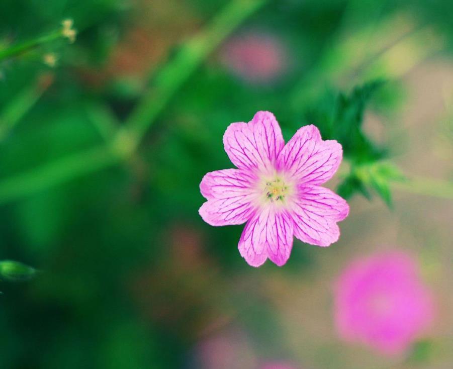 乐观的正能量心情说说:我不在乎时间,我只在乎结果