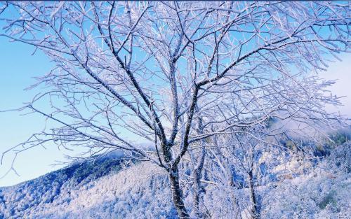 生活随笔美文欣赏:穿越冬天的孤独