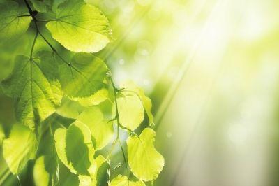 感悟人生励志美文:就算历尽磨难,也要向阳而生