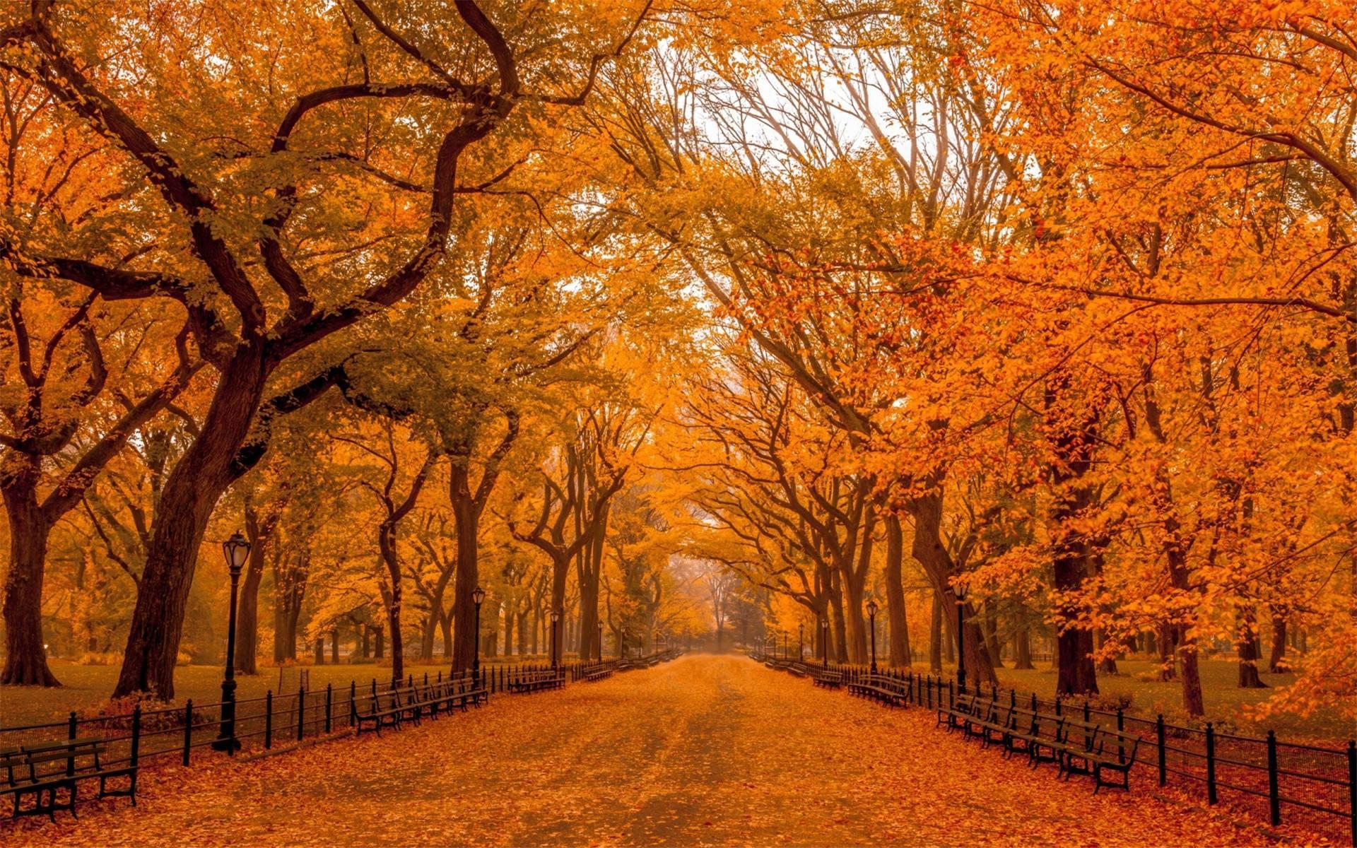 美文随笔欣赏:与秋天的重逢