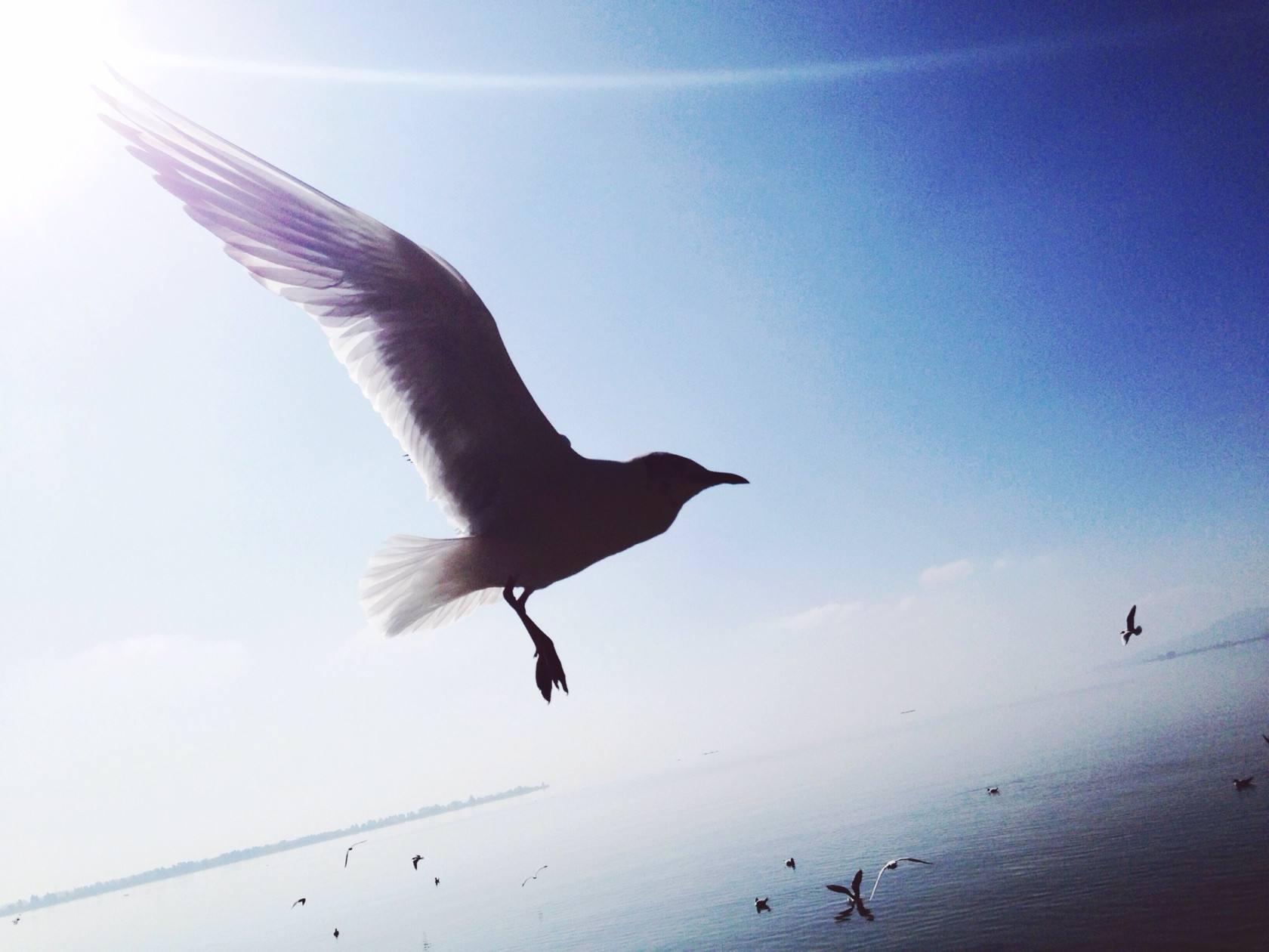 逆光也要飞翔的人生哲理励志说说欣赏