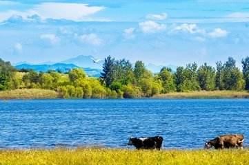 描写小河岸边的歌声散文