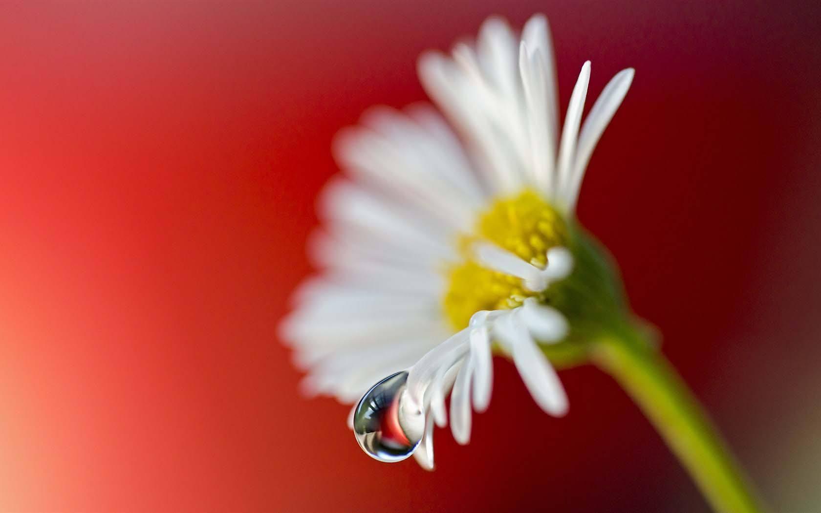 相信明天会更好的情感语录说说:人生就是要向前看的