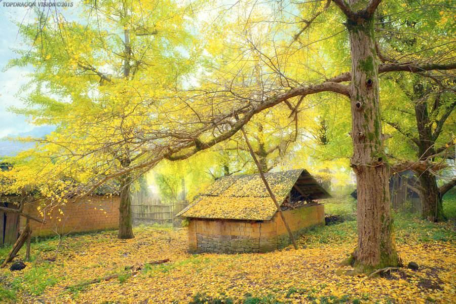关于秋雨抒情散文:自是相思抽不尽