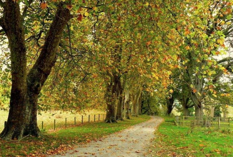 描写秋天的景色散文欣赏