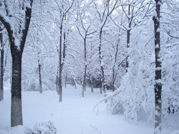 怀念冬天的雪散文欣赏